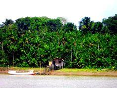 the amazon :)
