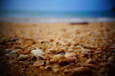 #beach #collection #nature #ocean #sand #sea #sea shells #seashell #seashells #shell #shells #shore #tropical