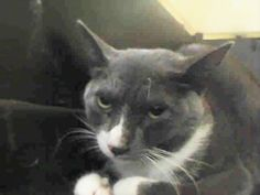 PEARL – A1094198. **SWEET PEARL NEEDS AN ANGEL TO SAVE HER **