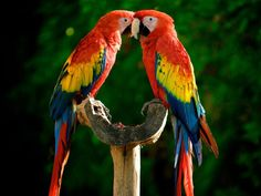 Two Colorful Parrots Beautiful Birds Mobile x iWallHD Wallpapers En Hd, 1920x1200 Wallpaper, Hd Backgrounds, Parrot Wallpaper, Animal Wallpaper, Bubbles Wallpaper, Wallpaper Maker, Wallpaper Desktop, Black Wallpaper