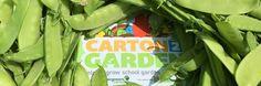 Spring 2017 Carton 2 Garden Contest | Pasco County Schools