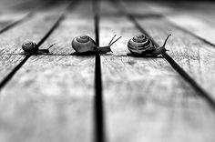 This post displays 35 Conceptual Photographs that blend the technique of conceptual photography and black & white photography. In conceptual photography the photographer tries to capture a concept or an idea. Conceptual Photography, Animal Photography, Photography Ideas, Amazing Photography, Photography Camera, Follow The Leader, Fotografia Macro, Jolie Photo, Black And White Pictures