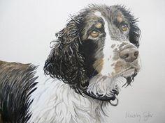 Watercolor Artwork, Watercolor Portraits, Watercolor Animals, Custom Art, Pet Portraits, Animals And Pets, Art Pieces, Springer Spaniel, Art Art