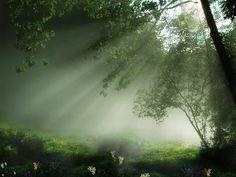 Inspiring Image Nature Sunlight Trees