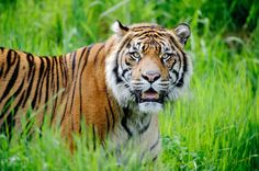 Palm oil production poses threat to rainforests, wildlife species | Regional Voices | The News Tribune