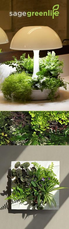 Keep plants around all year in every room in your home with new products blending design, nature & technology from sagegreenlife. AMBIENTA - A modern lamp designed to grow plants and illuminate your space & EDELWHITE  - A modern frame inspired by Alpine cliffs, built to stand alone or group together as living wall art. Learn more at sagegreenlife.com