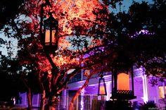 Austin Texas Event, Uplighting, Lanterns, Architectural lighting, Outdoor lighting, Intelligent Lighting Design, ILD Lighting, Purple.