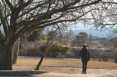 Hanging out  #throwback #gyeongju #skorea #studyabroad #travel #travelling #winter #instadaily #instagood #instalike #instatravel #bulguksa #temple #경주 #한국 #대한민국 #여행 #유학 #불국사 #절 #인스타포토 #인스타그램 by willharryball