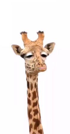 Guten morgen - New Ideas Mood Wallpaper, Animal Wallpaper, Heart Canvas, Canvas Art, Baby Animals, Funny Animals, Funny Giraffe, Cartoon Gifs, Cartoon Characters
