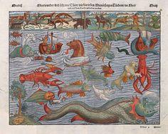Sea monster chart (ca. 1544) by Sebastian Münster