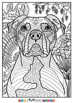 Free printable American Pit Bull Terrier coloring page available for download. Simple and detailed versions for adults and kids. #pitbull