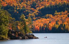 parc-provincial-algonquin-canada-p990.1280x814.jpg (Image JPEG, 1280×814 pixels) - Redimensionnée (87%)