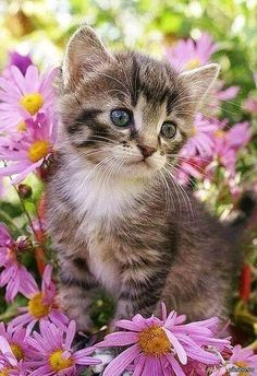 Why Should We Love Animals? Beautiful Kittens, Cute Cats And Kittens, Pretty Cats, I Love Cats, Crazy Cats, Kittens Cutest, Animals Beautiful, Pretty Kitty, Animal Gato