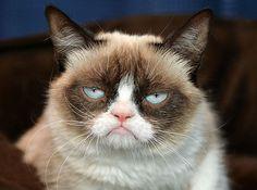 Grumpy Cat (001)