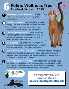 6 Ways To Keep Your Cat Healthy In 2015