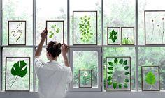 とてもシンプルな、デンマーク生まれのフレーム。アクリルガラスが2枚使われていて、ここに押し花など植物をはさんで飾ることができます。新しいグリーンの楽しみ方の提案です。