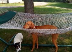 Poor daft dog. I want to be the human of a daft dog like this. Or the confused little one underneath!