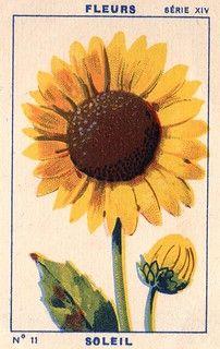 milliat fleurs011   patricia m   Flickr Art Floral, Art Hippie, Bel Art, Impressions Botaniques, Art Et Illustration, Mellow Yellow, Pretty Art, Botanical Prints, Wall Collage