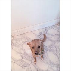 Ariana Grande has the cutest puppies!