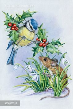 PortForLio - Blue tit on holly, woodmouse with snowdrops Christmas Drawing, Christmas Art, Bird Pictures, Christmas Animals, Animal Cards, Cute Illustration, Bird Art, Beautiful Paintings, Cute Drawings