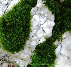 Moss | ... Loudoun County, Virginia Through Photography: Green moss and granite