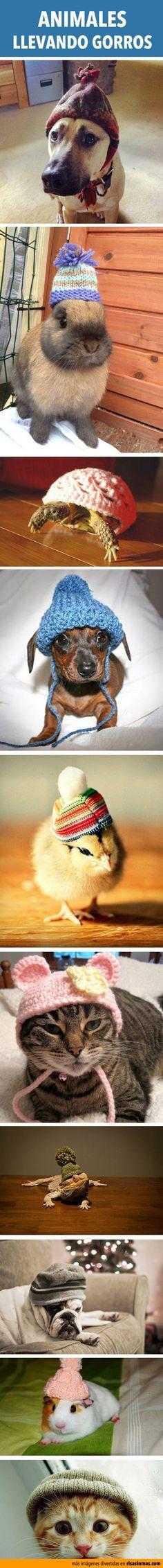 Animales llevando gorro
