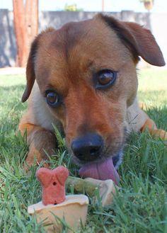 DIY Friday: Homemade Dog Treats