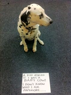 35 Of The Most Hilarious Pet Confessions | BlazePress