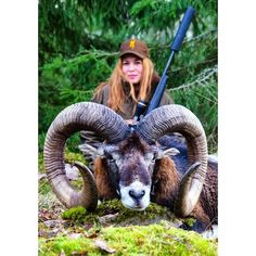Biggest mouflon ever shoot in Sweden 99100 cm.Over 225 points.Swedish record is 2135 points...MONSTER RAM! tag your hunting related pictures with #swedenishunting for a chance to be featured in our account @born2hunt_alexandrahellstrom