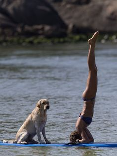 Cecilia Canetti practices yoga on a stand-up paddle board as her dog Polo accompanies her off Barra de Tijuca beach in Rio de Janeiro, Jan. Cool Pictures, Funny Pictures, Random Pictures, Sup Stand Up Paddle, Sup Yoga, Standup Paddle Board, Sup Surf, Learn To Surf, Remo