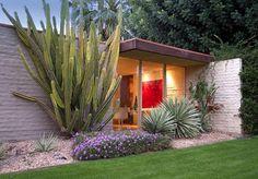 some cactus love in a textural garden