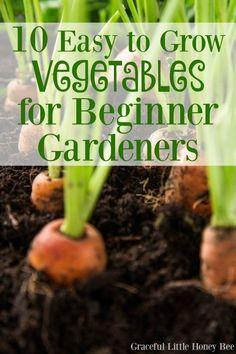 10 Easy to Grow Vegetables for Beginner Gardeners