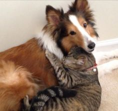 18 Pictures of Cats Caught Loving Dogs - We Love Cats and Kittens