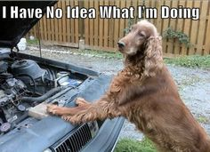 They're even worse at fixing a car. | 32 Dogs Who Are Completely In Over Their Heads
