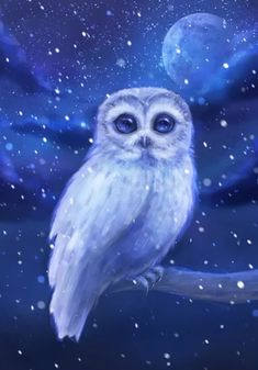 A white winter hoot owl in this monochromatic scean with snow and a full moon. By, ARiA Illustration.