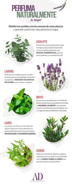 Eco Garden, Garden Plants, Indoor Plants, House Plants, Organic Gardening, Gardening Tips, Plantas Indoor, Plante Carnivore, Plants Are Friends