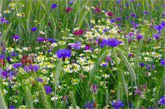 Blumenwiese im Hochsommer - Tanja Riedel