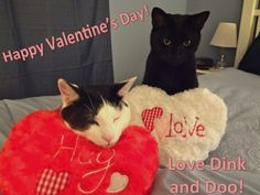 Happy Valentine's Day from Dink and Doo!