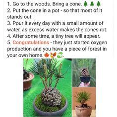 Indoor Garden, Garden Plants, Indoor Plants, Decoration Plante, Plant Care, Dream Garden, Permaculture, Garden Projects, Art Projects