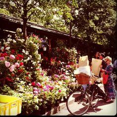 Paris flower market, A dream
