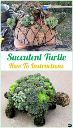 DIY Succulent Turtle Topiary Instruction- DIY Indoor Succulent Garden Ideas Projects