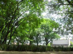 Belas árvores, em um lugar,  que só existiram mortes!!!   Parque da Juventude- Carandiru. Vale a pena visitá-lo!!!