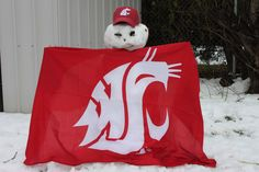 Go Cougs!
