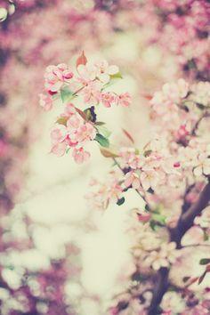 It's summer and I'm still posting spring photos …by Megan...