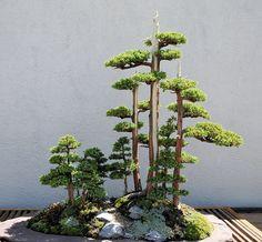 John Naka's Goshin Bonsai at US National Arboretum Washington, DC | Flickr: partage de photos!