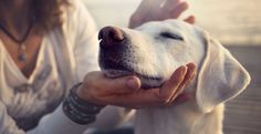 If your pet is not breathing, you might need to perform rescue breathing for your dog. Here are some tips for how to perform artificial respiration on your dog. Coconut Oil For Dogs, Oils For Dogs, Pet Supplements, Easiest Dogs To Train, Coconut Health Benefits, Dog Training Tips, Training Videos, Dog Behavior, Beautiful Dogs