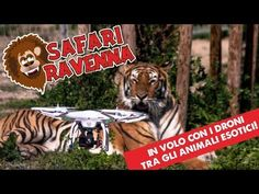 Zoo Safari Ravenna - video con drone