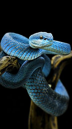 colorful snakes Work of Nature Colorful snakes, Pet