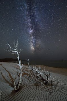 Junipers - in Sardinia there are dunes and dried juniper trees that make the fascinating composition, it is a pleasure to be able to do the night in such places. It was July and the Milky Way was now already high on the horizon.