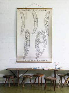 love the old science chart & wood stools in this photo by philip fisk. via automatism